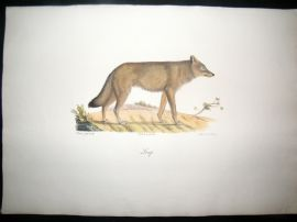 Saint Hilaire & Cuvier C1830 Folio Hand Colored Print. Wolf